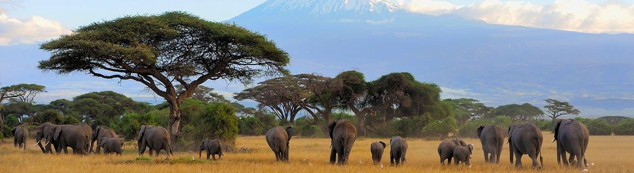 A Kilimandzsáró valójában egy vulkán, amely Tanzánia és egyben Afrika legmagasabb hegye, és amelynek legmagasabb pontja a Kibo-csúcs. A ködpárába burkolózó, lecsüngő liánokkal borított erdőségekben tekintélyt parancsoló ősfa óriásokkal találkozhatunk. Feljebb a bokros, ligetes térségek különleges növényei ejtik ámulatba az erre kirándulókat. A hegyóriás legnépszerű útvonala a Machame út, amely egyben a Kilimandzsáró legszebb ösvénye is. Ahogy egyre feljebb kapaszkodunk a csúcs felé, fokozatosan gyérebb lesz a növényzet is, majd szinte sivatagi kopár látvány tárul a szemünk elé, és letekintve, mintha felhőpamacsokban állnánk. Aki nem járt még a Kilimandzsárón, annak elképzelhetetlen ez az élmény. Csodálatos, semmihez nem hasonlítható panoráma, amelyet örök emlékként vihetünk haza innen szuvenírként. A Kilimandzsáró Nemzeti Park méltán lett a Világörökség része, mindenképpen érdemes időt szakítani rá.